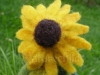 Yellow coneflower child